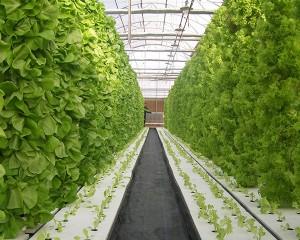 hydroponics taigh-glainne