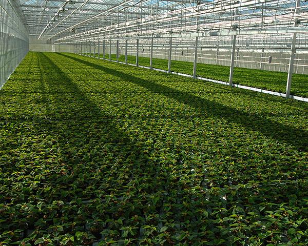 polycarbonate-greenhouse-10