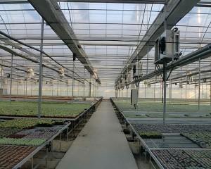 seedling leabaidh