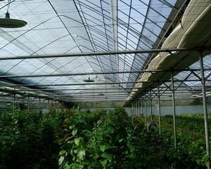 Flower Greenhouse