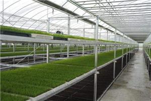 """Üvegházi zöldségpalánták tartsák be a """"három magas három alacsony""""."""